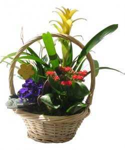 Minigarden in the basket