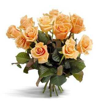 Gorgeous peach roses
