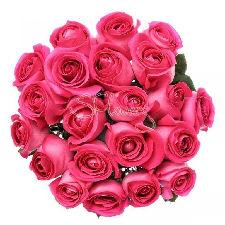 Fresh crimson roses