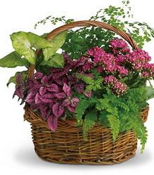 Горшечное растение «Young and Green»