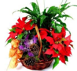 Горшечное растение «Christmas Garden»