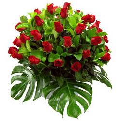 «Many roses»