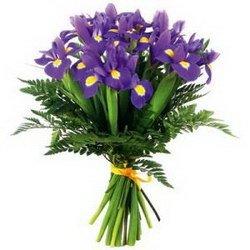 «Classy irises»