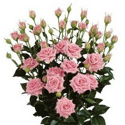 Букет «Spray roses»