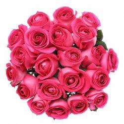 «Fresh crimson roses»