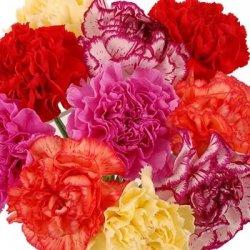 Букет «Carnations»